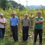 Localnicii de pe Valea Ampoiului sunt terorizați de mistreți