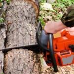 Un bărbat din Zlatna a fost lovit și omorât de un arbore la Valea Lazului