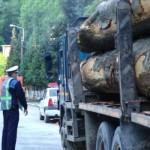 16 metrii cubi de lemn fără documente de proveniență confiscaţi de poliţiştii din Zlatna