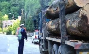 transport-ilegal-lemn