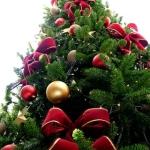 Cum să împodobești BRADUL de CRĂCIUN, ornamentul cel mai important al sărbătorilor de iarnă | zlatnainfo.ro