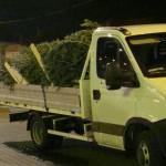 81 de brazi de Crăciun, fără acte de proveniență, descoperiți de polițiști într-o autoutilitară, pe raza localității Tăuți