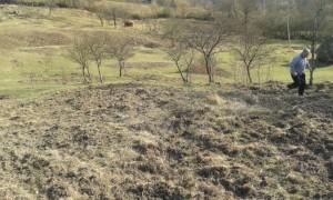 porcii-mistreti-distrug-terenurile-din-zona-zlatna-apr-2015