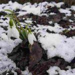 Mesaje de 1 martie, Mărțisor. Felicitări şi urări pe care le puteţi trimite cu ocazia venirii primăverii | zlatnainfo.ro