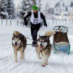 Un tânăr din Zlatna va participa la Campionatul Mondial de Atelaje Trase de Câini din Slovacia