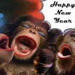 Mesaje de Anul Nou 2019 haioase. URARI și FELICITARI amuzante pe care le puteți trimite prietenilor | zlatnainfo.ro